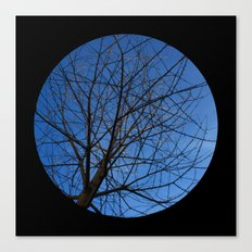 Trees from below 7 Canvas Print