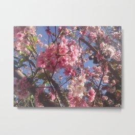 cherry's blossom Metal Print