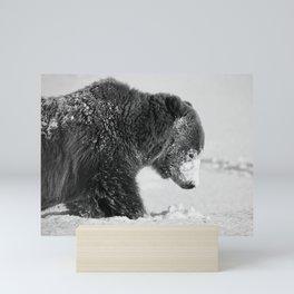 Alaskan Grizzly Bear in Snow, B & W - I Mini Art Print