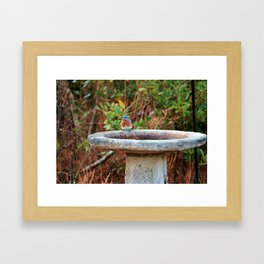 Bluebird On Birdbath Framed Art Print