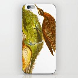 Eskimo Curlew Bird iPhone Skin