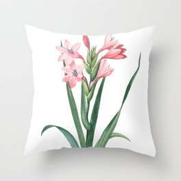 HIGHEST QUALITY botanical poster of Gladiolus Throw Pillow