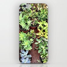 Succulent Party iPhone & iPod Skin