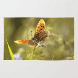 Morning impression with orange butterfly Rug