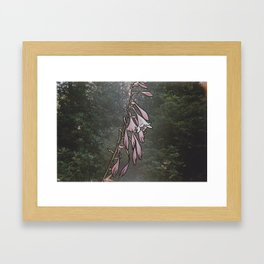 Hosta Hiems Framed Art Print