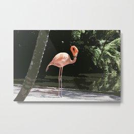 Glamourous Flamingo Metal Print