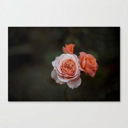 pretty as a rose Canvas Print