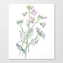 Purple Watercress Flowers Painting Canvas Print