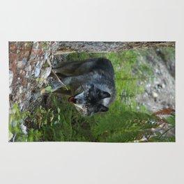 Stalking - Alpha Male Grey Wolf Rug