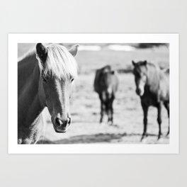 B&W horses Art Print