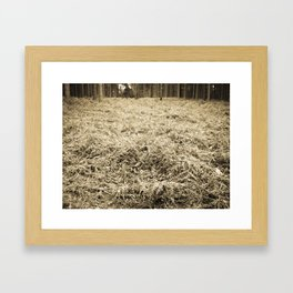Bracken in the forest Framed Art Print