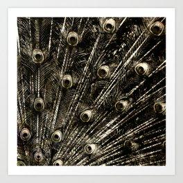 427 8 Steel Peacock Feathers Art Print