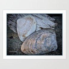 Driftwood and Sea Shells Art Print