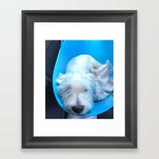 Dog2 Framed Art Print
