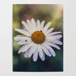 Daisy III Poster