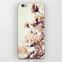 magnolia iPhone & iPod Skins featuring Magnolia by Dena Brender Photography