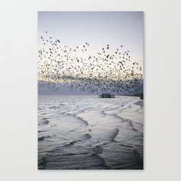 murmurations over Brighton Canvas Print