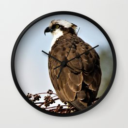 Magnificent Osprey Raptor by Reay of Light Wall Clock