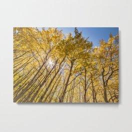 Sparkling Autumn Metal Print