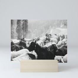 Grazing cattle, Kashmir, India - 3 Mini Art Print