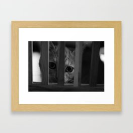 Who Lurks Under The Table? Framed Art Print