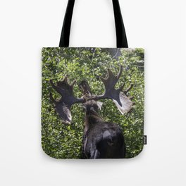 Big Moose Rack in RMNP Tote Bag
