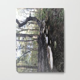 Fungus on the Forest Floor Metal Print