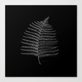 New Zealand Fern Leaf Canvas Print
