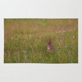 Bunny. Rug