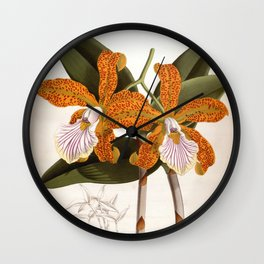 Cattleya Velutina Vintage Lindenia Orchid Wall Clock