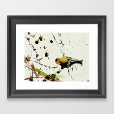 BACK YARD BIRD 013 Framed Art Print