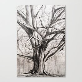 Tree in the Park Canvas Print