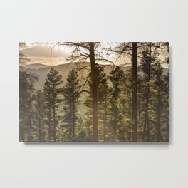 Mountain Forest New Mexico - Nature Photography Metal Print