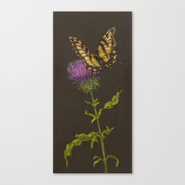 Thistle with Swallowtail Canvas Print
