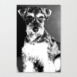 Schnauzer Photo Canvas Print