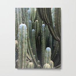 Curious Cacti, Jardin Majorelle, Marrakesh, Morocco Metal Print