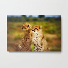 Pair of Cheetahs Metal Print