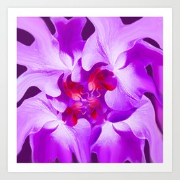 Abstract Orchid In Lavender Art Print