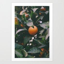 Country Orange Art Print