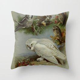 Vintage Print - Hawk Owl, Snowy Owl, Little Owl, from Thorburn's British Birds (1915) Throw Pillow