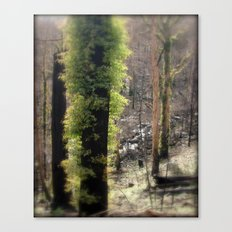 Re-Growth Canvas Print