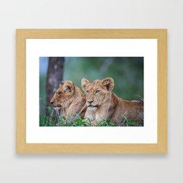 Lion brothers Framed Art Print