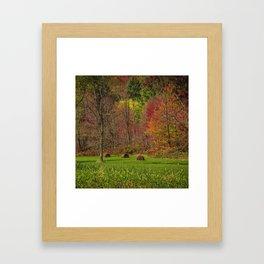 Lonely Bails of Color Framed Art Print