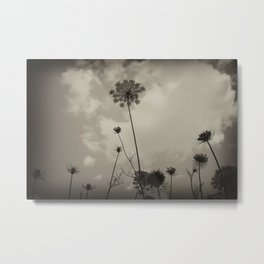 "Queen Anne's Lace ""black and white"" Metal Print"
