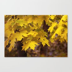 Autumn leaves 7258 Canvas Print