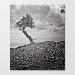 Lone Pine, Bryce Canyon Canvas Print