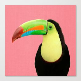 Toucan Bird - Pink Canvas Print