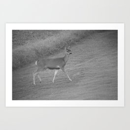 Southern California Deer Walking In The Grass In Black And White Art Print