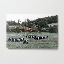 Cattle / United Kingdom Metal Print
