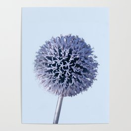 Monochrome - Starry night on the thistle globe Poster